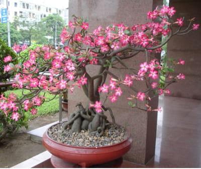 L 39 art du bonsa bien s 39 occuper de son bonsa journal des femmes - Comment s occuper d un bonsai ...