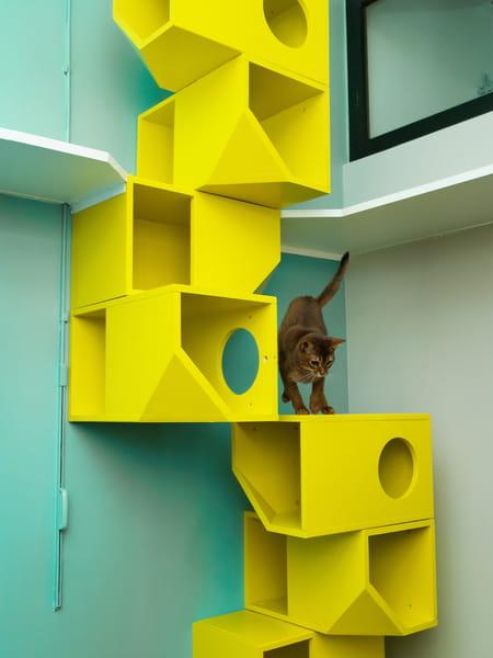 un premier h tel pour chats paris. Black Bedroom Furniture Sets. Home Design Ideas