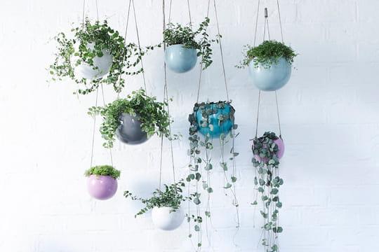 10 plantes d 39 int rieur suspendre journal des femmes. Black Bedroom Furniture Sets. Home Design Ideas