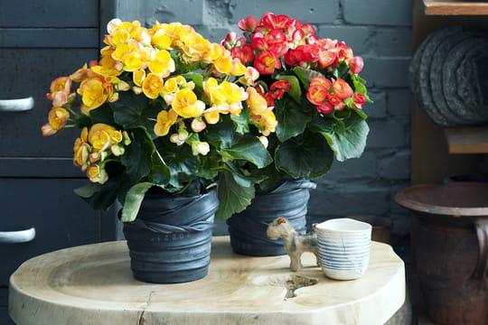 diy un cache pot r cup 39 avec une chambre air journal des femmes. Black Bedroom Furniture Sets. Home Design Ideas