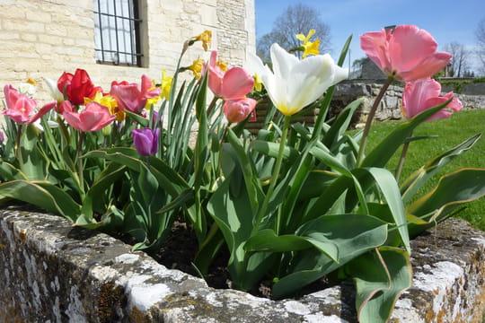 Planter les bulbes de printemps - Bulbes a planter au printemps ...