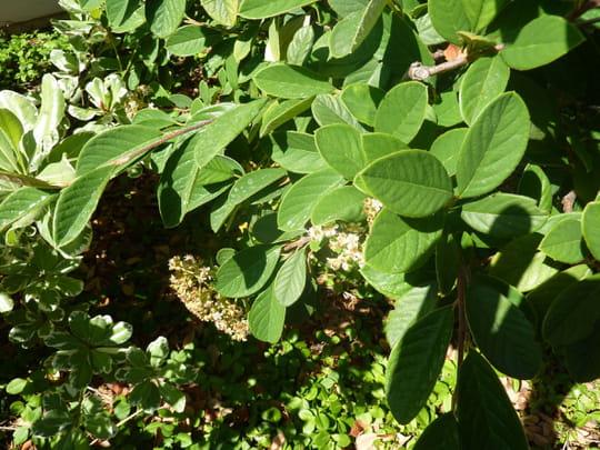 Qu 39 est ce qu 39 un arbuste feuillage persistant journal - Qu est ce qu un jardin ...