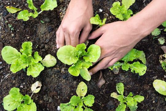 Que faire au potager en mars - Que faire au jardin en mars ...
