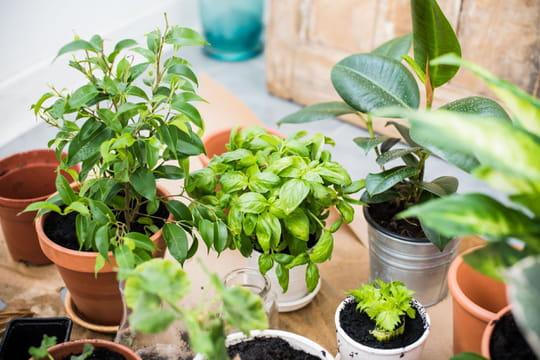 Comment arroser ses plantes quand on est en vacances - Comment bien arroser ses plantes ...