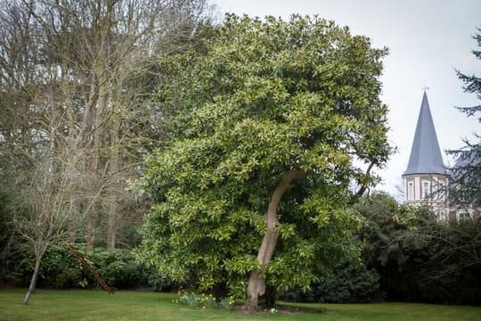 Quel arbre original planter dans le jardin - Planter un pied de vigne dans son jardin ...