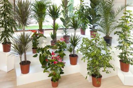 C 39 est la foire aux plantes vertes chez dia journal des for Jardin aux plantes