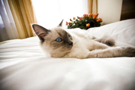 un h tel pour chats ouvre paris journal des femmes. Black Bedroom Furniture Sets. Home Design Ideas