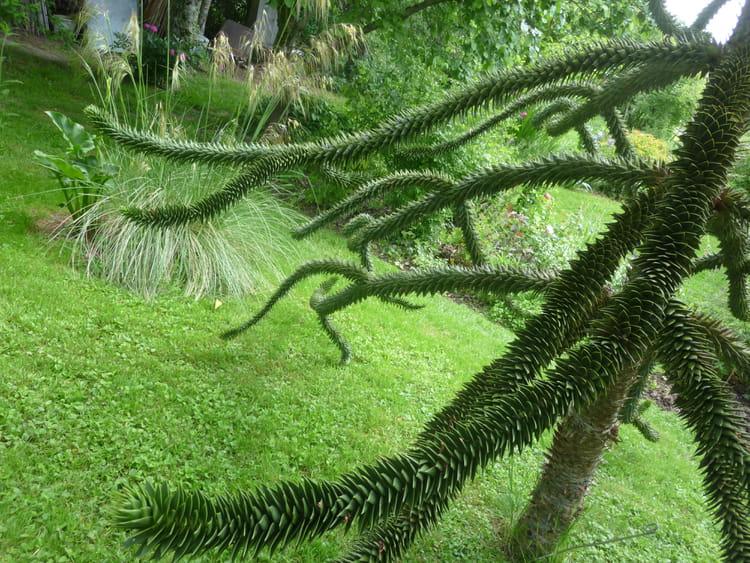Des Arbres Symboles Le Jardin Pour Tous Les Sens