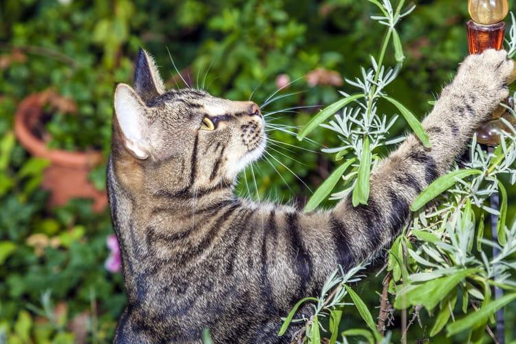 R Pulsifs Contre Les Chats
