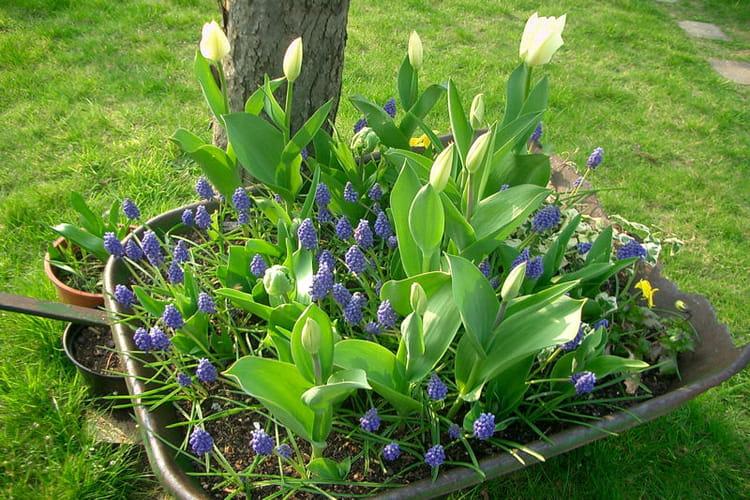 Brouette au jardin vos contenants les plus originaux for Brouette jardin