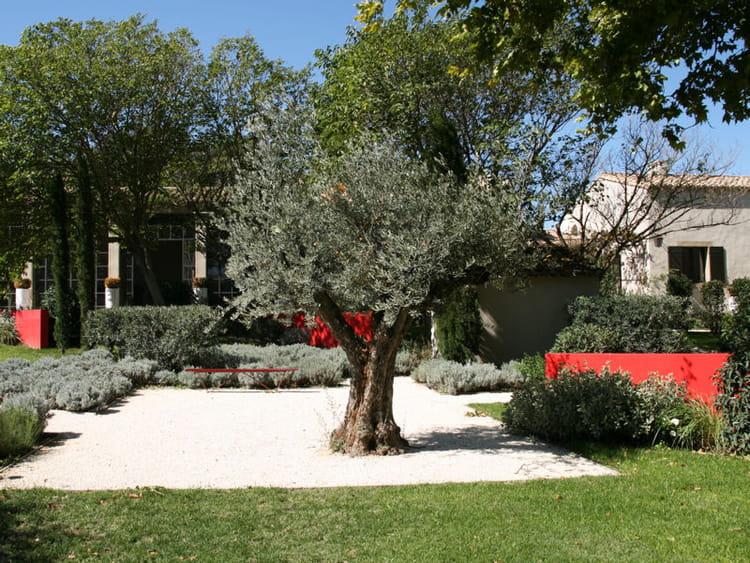 Bel olivier de provence des jardins m diterran ens exotiques journal des femmes - Deco jardin olivier nanterre ...