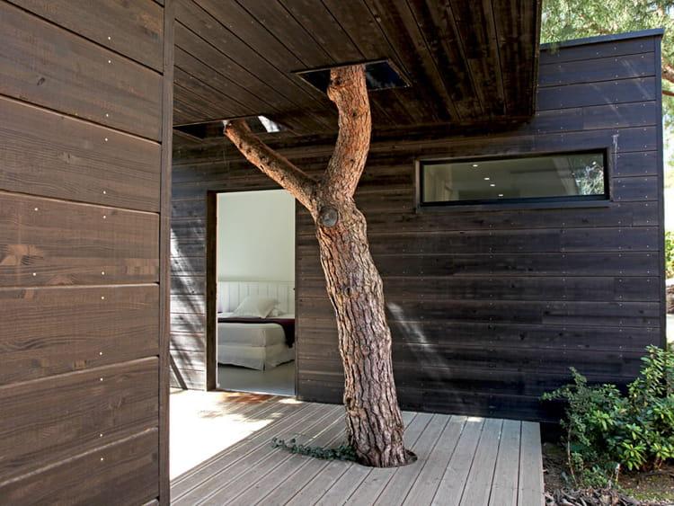 un arbre dans la maison demeure de r ve en bord de mer journal des femmes. Black Bedroom Furniture Sets. Home Design Ideas