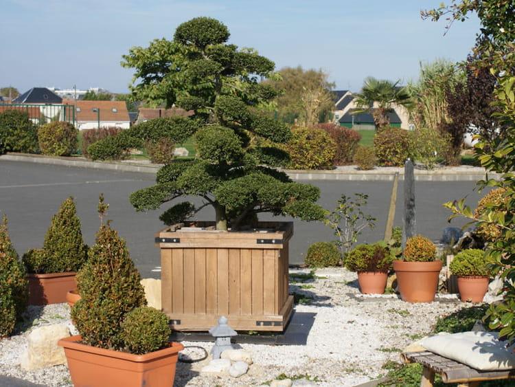 Une haie de bonsa s vos plus beaux jardins japonais - Deco jardin journal des femmes toulouse ...