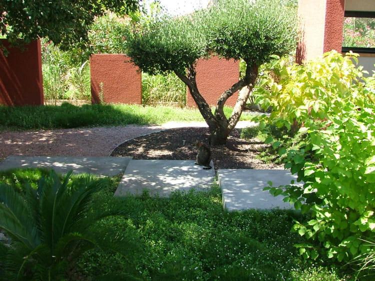 L 39 olivier taill en nuages un jardin japonais quatre ans for Olivier taille nuage