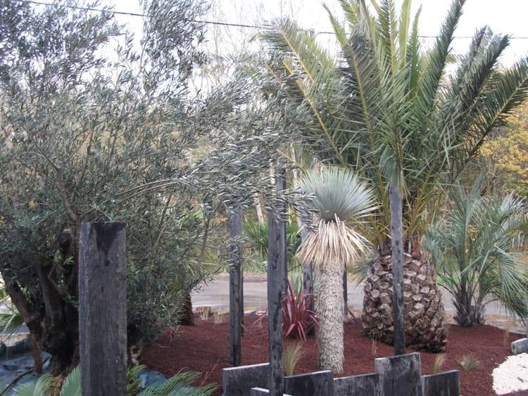 diff rentes essences de palmiers un jardin sec et exotique avec terrasse journal des femmes. Black Bedroom Furniture Sets. Home Design Ideas
