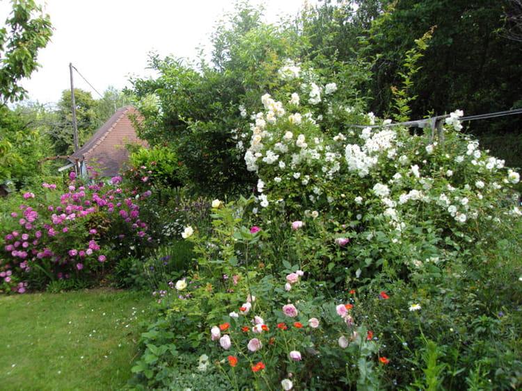Visitez le jardin anglais de michelle journal des femmes for Image de jardin anglais