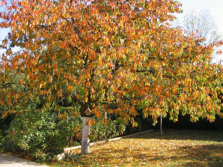 l 39 arbre qui perd ses feuilles des jardins d 39 automne flamboyants journal des femmes. Black Bedroom Furniture Sets. Home Design Ideas