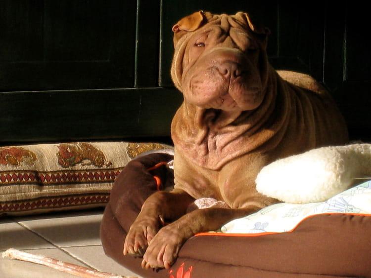 quel chien en appartement journal des femmes. Black Bedroom Furniture Sets. Home Design Ideas