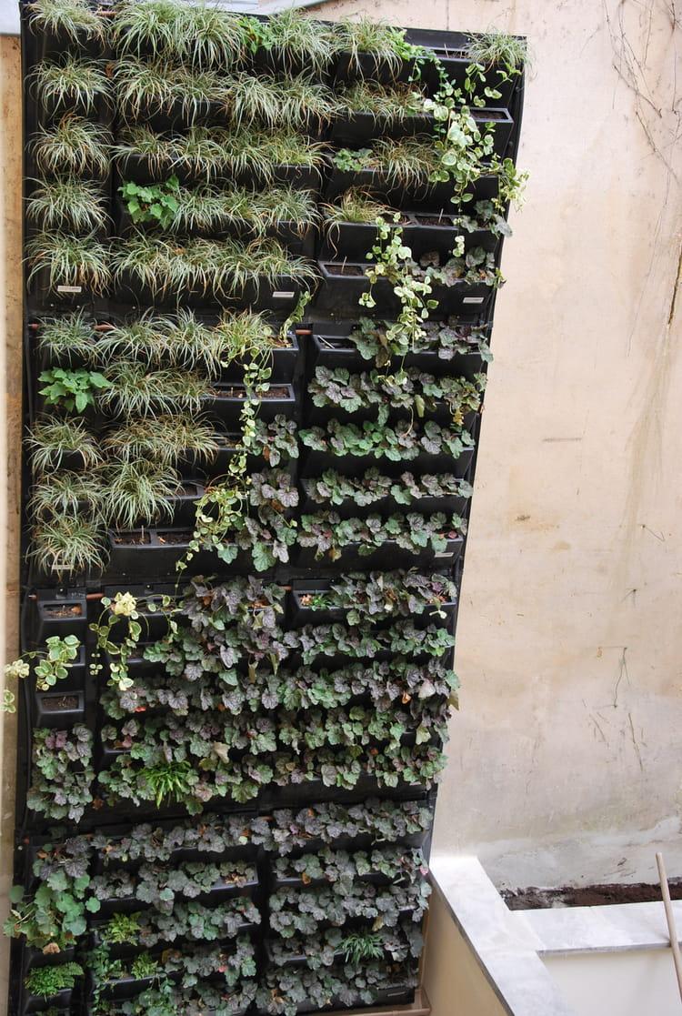 Quels Sont Les Types De V G Taux Planter Construire Un Mur V G Tal En Int Rieur Et En