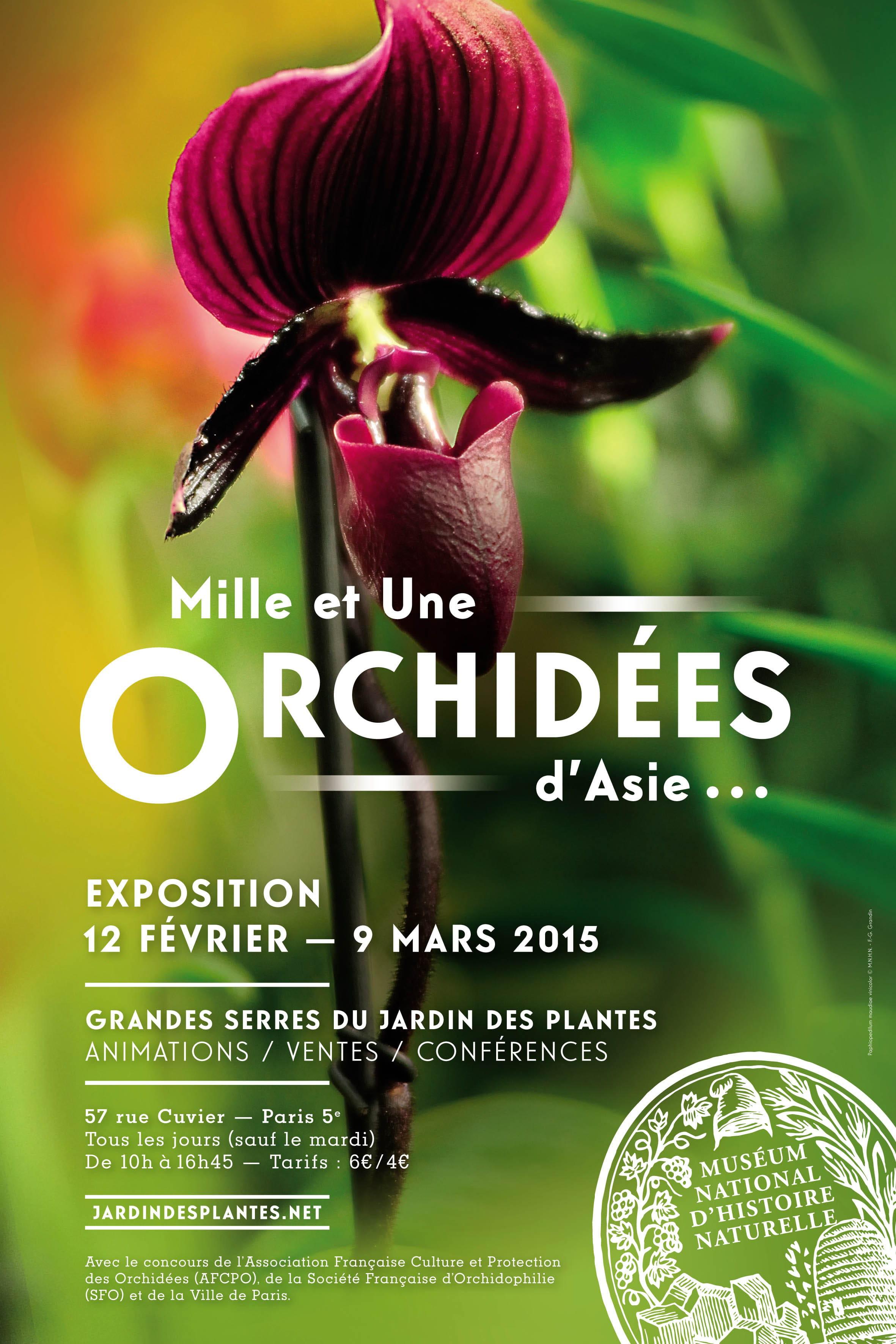L'orchidée fait la belle sous les grandes serres