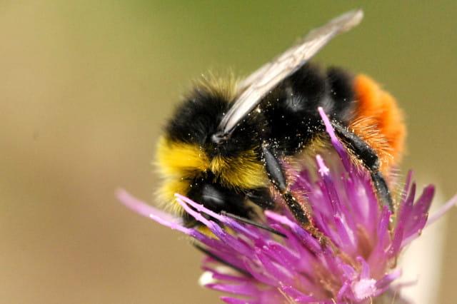 pesticides chez les particuliers un impact grande chelle en france. Black Bedroom Furniture Sets. Home Design Ideas