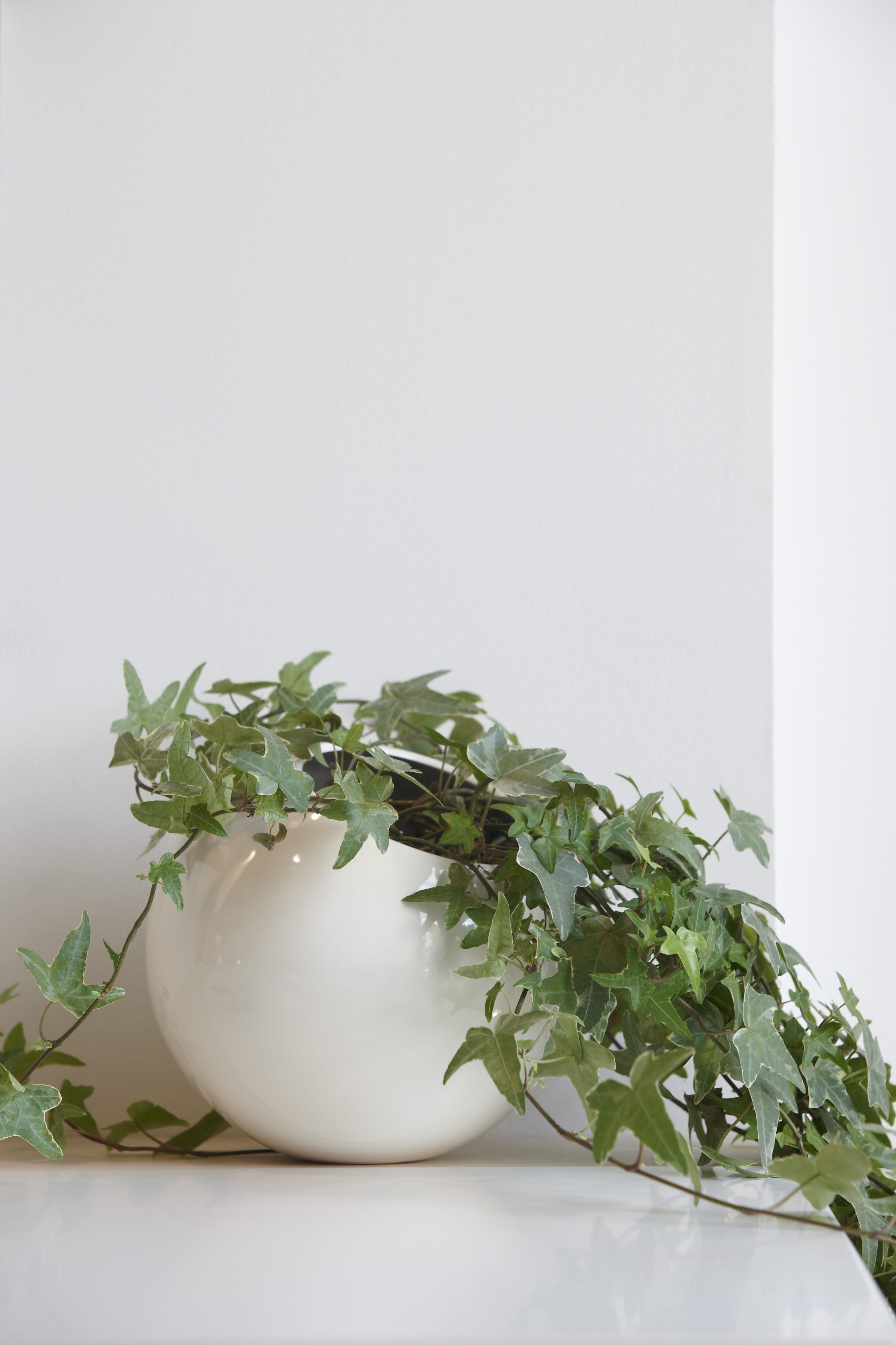 Vigne Lierre En Pot 10 Plantes D 39 Int Rieur Suspendre Journal Des Femmes