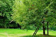 http://www.journaldesfemmes.com/jardin/potager-fruit/image/pommier-jardin-potager-fruits-1019577.jpg?1320981965