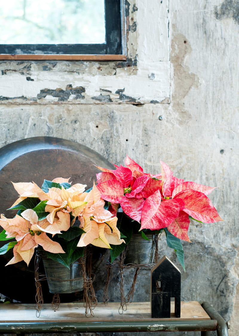 offrir un pi destal sa plante d 39 int rieur diy un support de pot de fleur en fil de fer. Black Bedroom Furniture Sets. Home Design Ideas