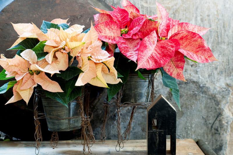 diy un support de pot de fleur en fil de fer journal des femmes. Black Bedroom Furniture Sets. Home Design Ideas