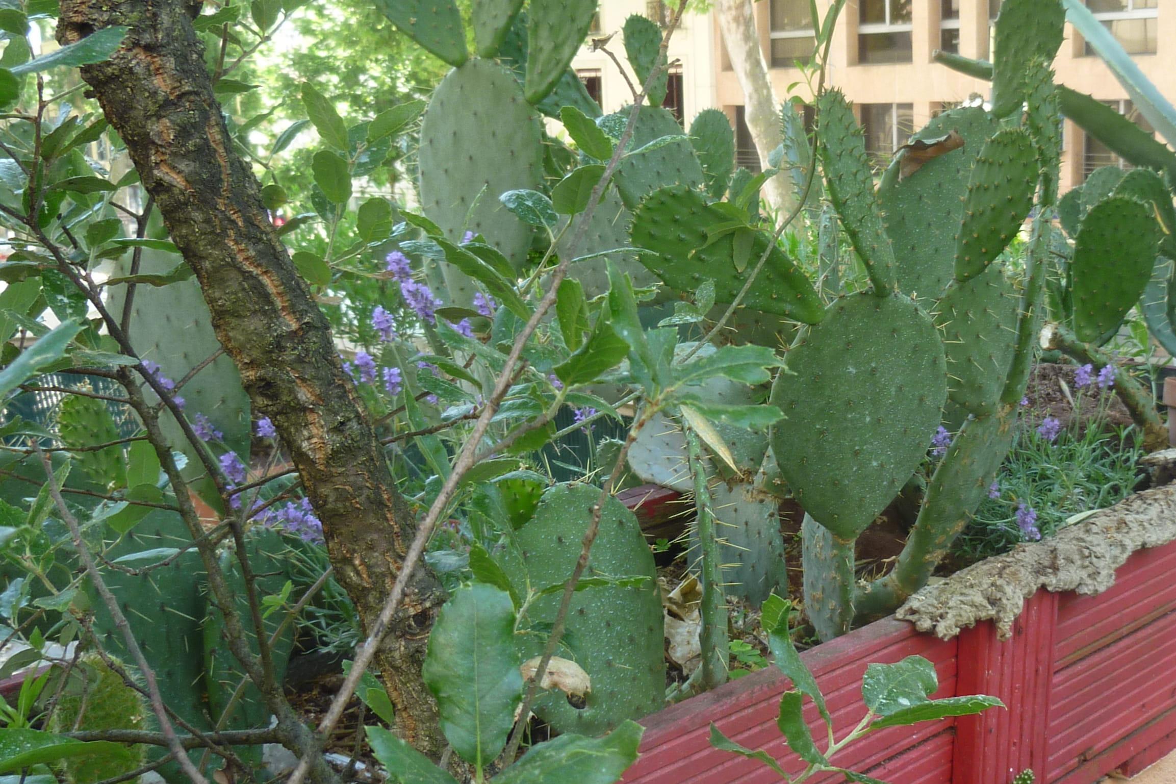 Les plantes grasses plantation et bouturage journal des femmes for Plantation jardin