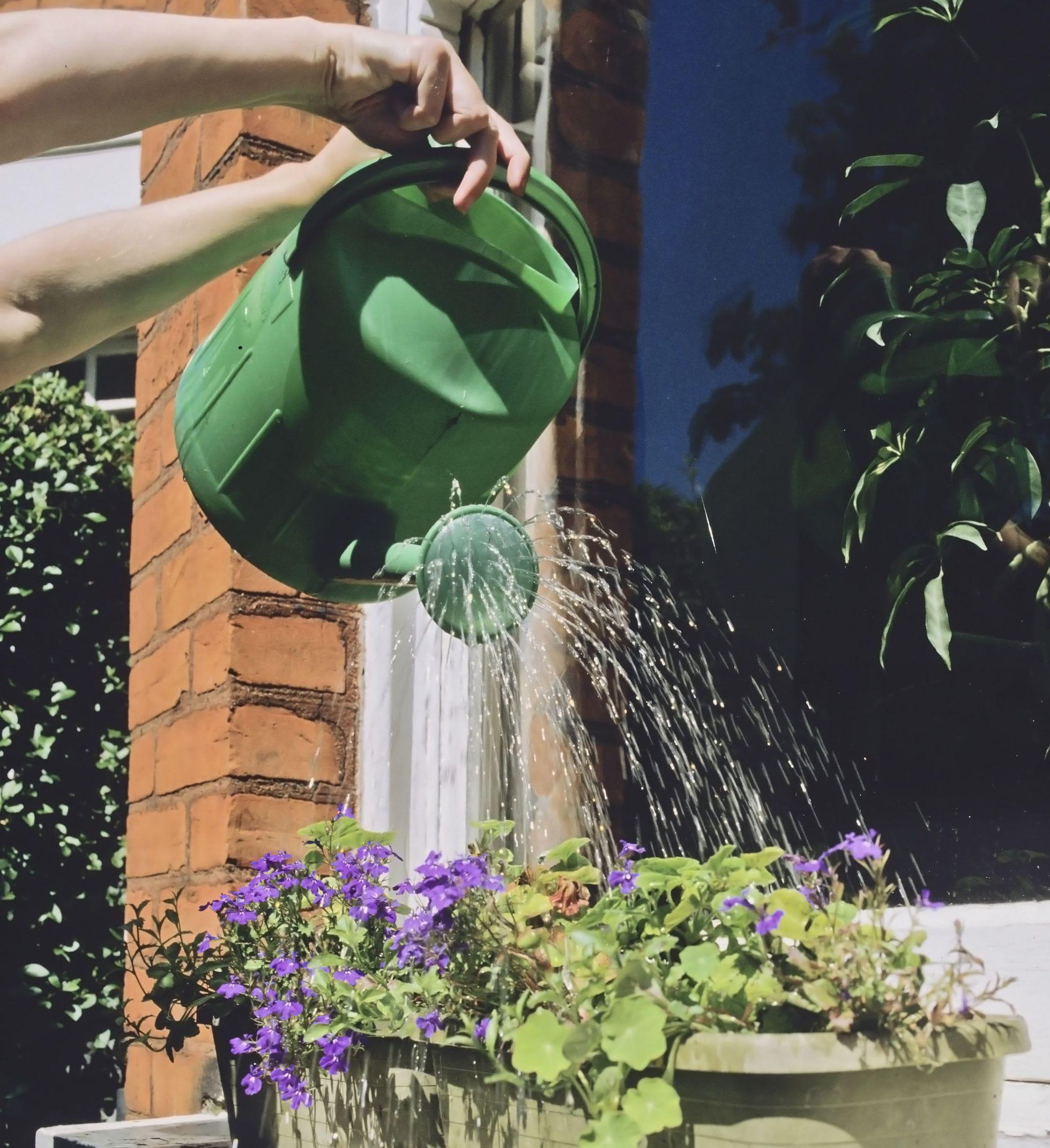 comment arroser ses plantes pendant les vacances. Black Bedroom Furniture Sets. Home Design Ideas