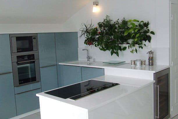 Des plantes pour sublimer sa cuisine des murs v g taux for Decoration epuree definition