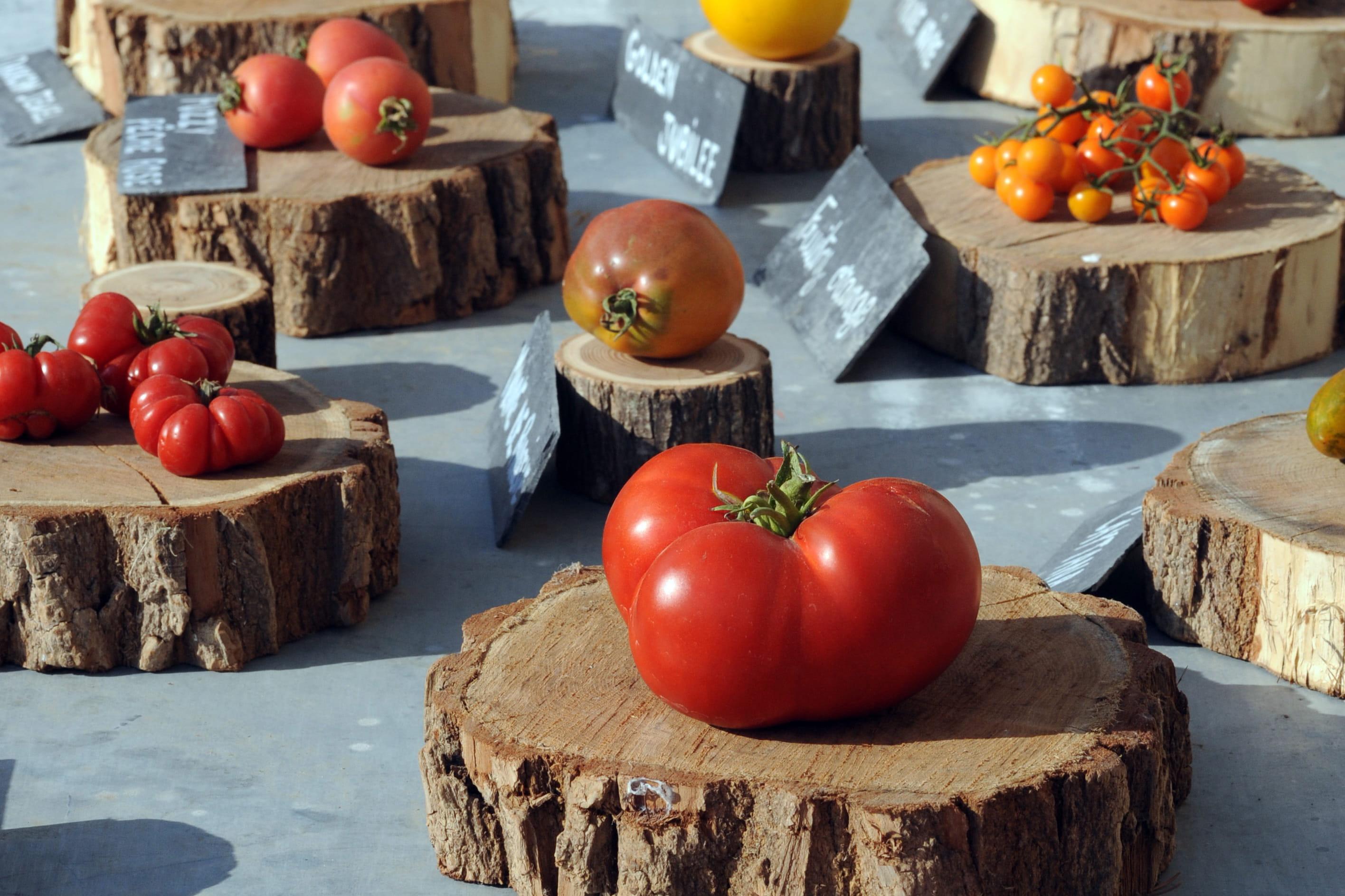 le festival de la tomate vous invite une pasta party journal des femmes. Black Bedroom Furniture Sets. Home Design Ideas