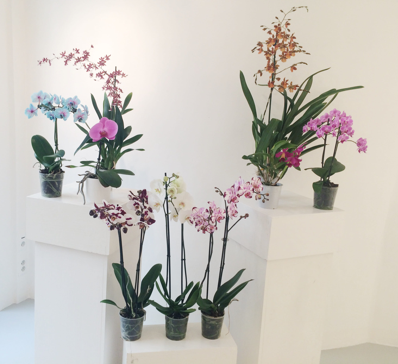 Elodie gossuin ambassadrice romantique des orchid es for Comment s occuper d un palmier