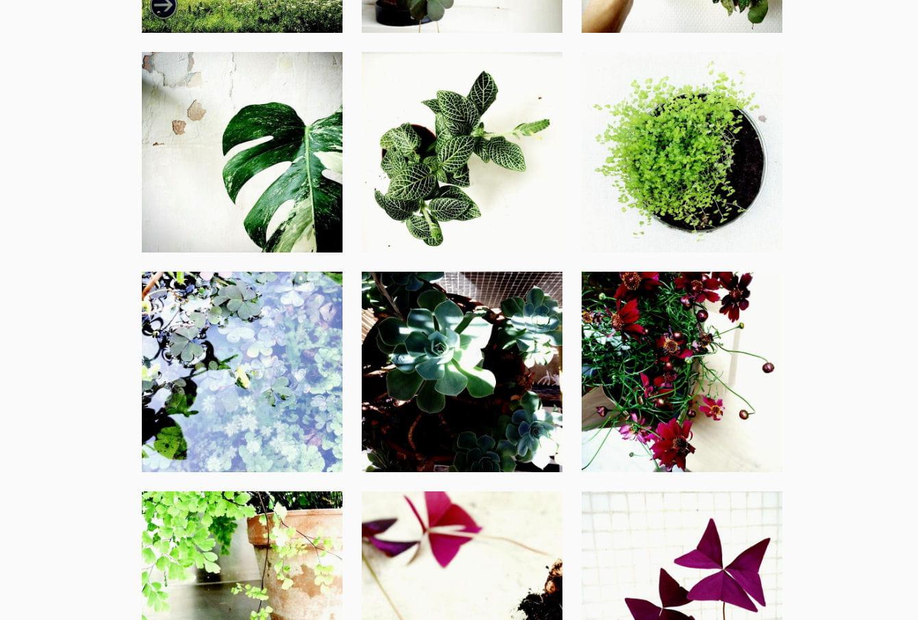 5 comptes instagram qui donnent envie d 39 avoir la main verte journal des femmes - Avoir la main verte ...