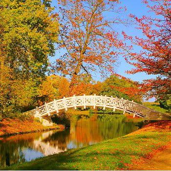 Décorations pour un beau jardin d'automne : Déco pour un ...