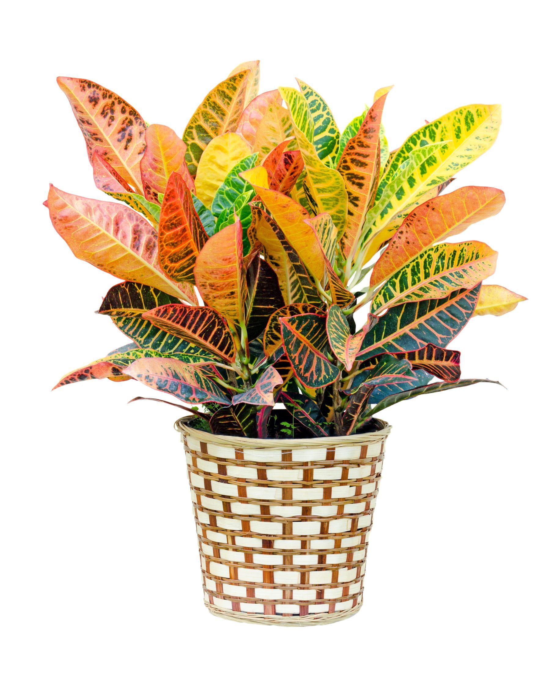 8 Plantes D 39 Int Rieur Faire Pousser Chez Soi