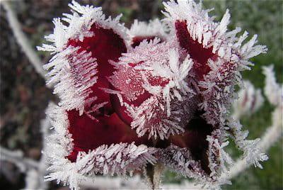 les jardins ont également un certain charme en hiver