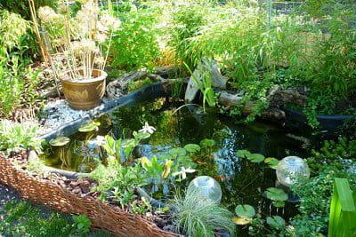 Entretien du bassin en d cembre for Entretien jardin decembre