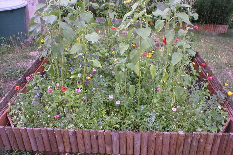 Carr de fleurs de jach re visitez le jardin de gaby - Fleur de jachere ...