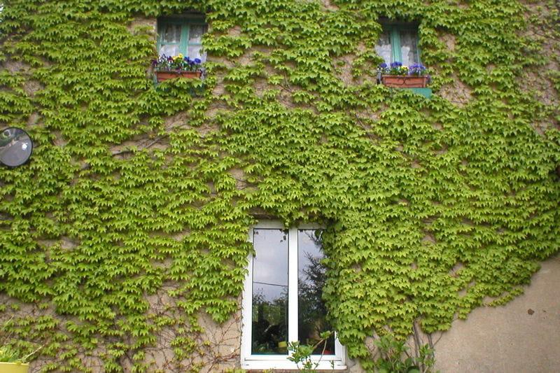 Vigne vierge sur la fa ade visitez le jardin de gaby journal des femmes - Le jardin des grandes vignes ...