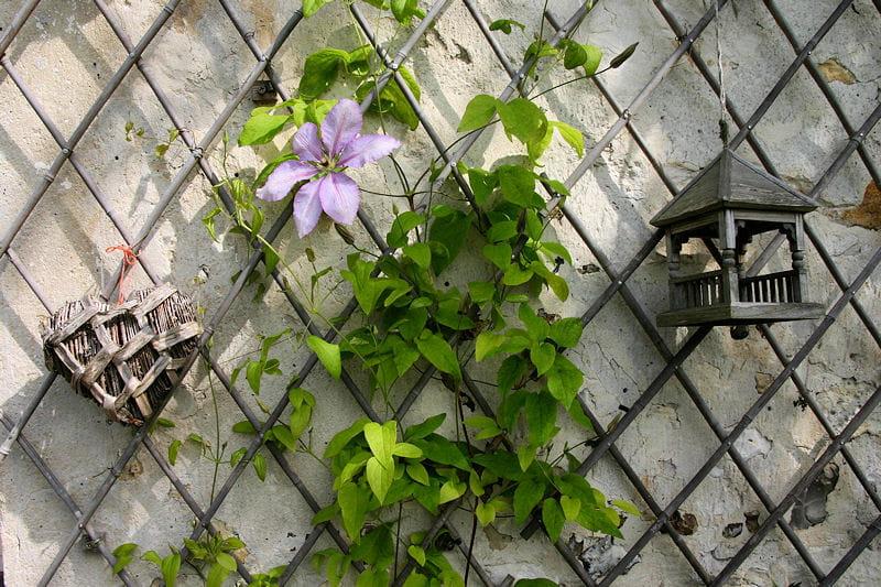un treillis fleuri plantes grimpantes ces fleurs qui habillent le jardin journal des femmes. Black Bedroom Furniture Sets. Home Design Ideas