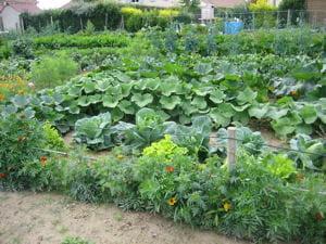 Au potager le calendrier du jardinier du mois de - Calendrier du potager mois par mois ...