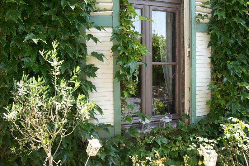 fen tre encadr e de vigne vierge c t jardin des fen tres qu 39 on remarque journal des femmes. Black Bedroom Furniture Sets. Home Design Ideas
