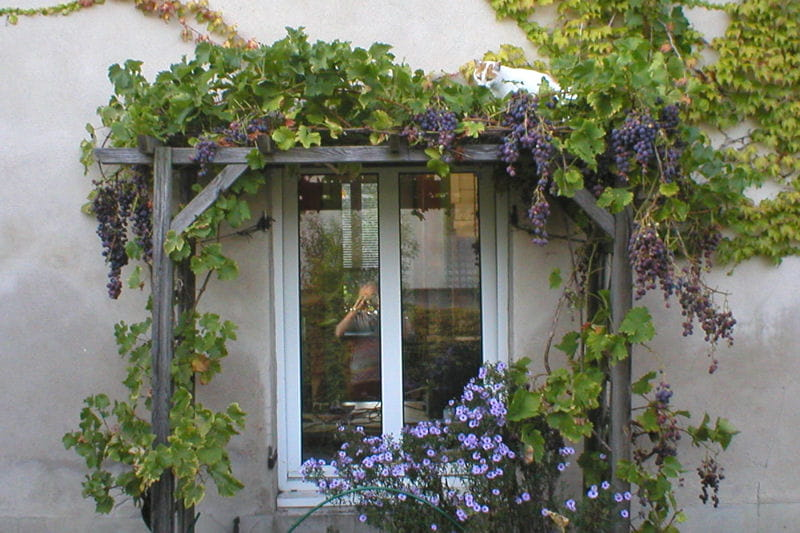 pergola et vigne c t jardin des fen tres qu 39 on remarque journal des femmes. Black Bedroom Furniture Sets. Home Design Ideas