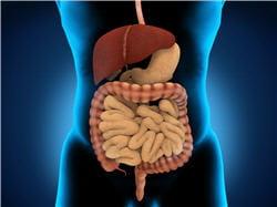 la fibroscopie permet d'explorer l'appareil digestif.
