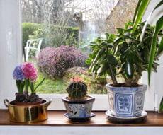 o placer sa plante d 39 int rieur bien s 39 occuper de ses plantes d 39 int rieur journal des femmes. Black Bedroom Furniture Sets. Home Design Ideas