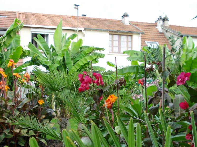 Bananiers palmiers et bougainvilliers des jardins for Decoration jardin palmier