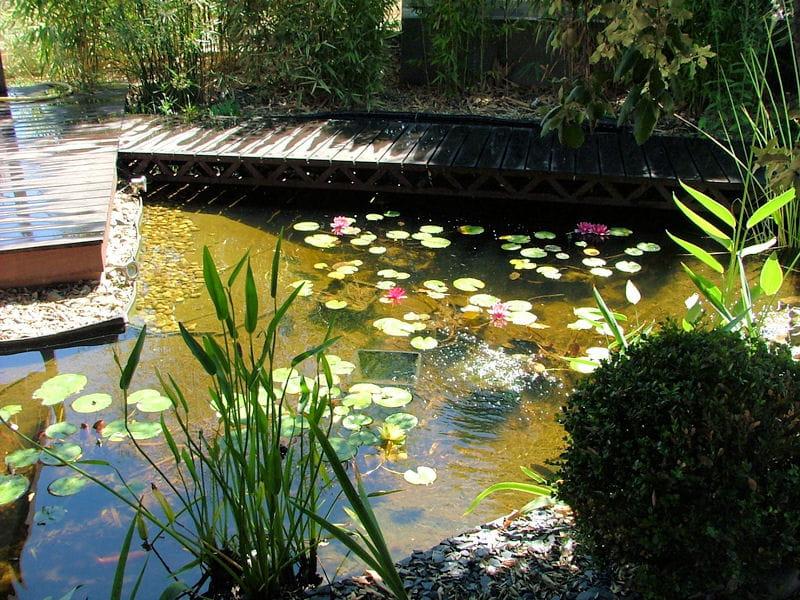 Un bassin la zen attitude un jardin japonais quatre ans apr s sa r alisation journal des - Bassin japonais dessin dijon ...