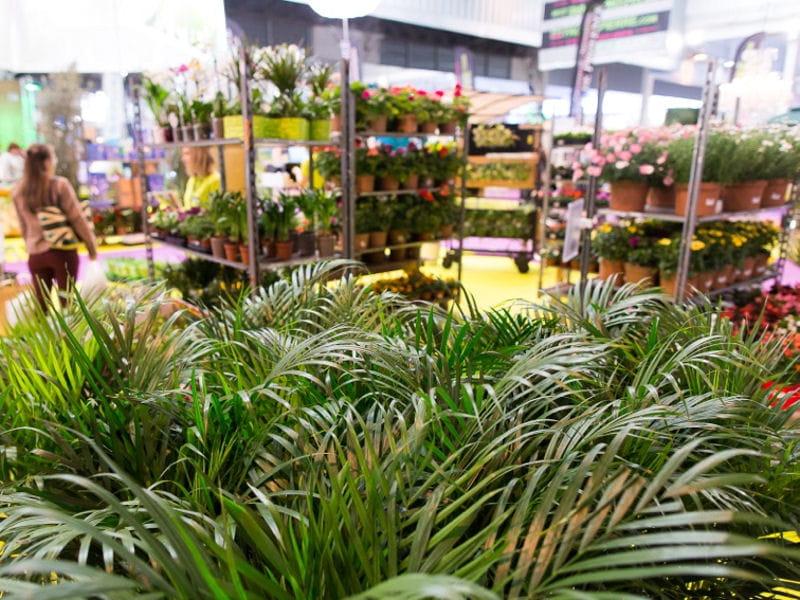 Cr er un jardin sur palette journal des femmes - Creer un jardin mediterraneen avignon ...